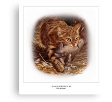 BLACK-FOOTED CAT 2 Canvas Print