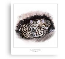 BLACK-FOOTED CAT 3 Canvas Print