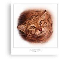 BLACK-FOOTED CAT 4 Canvas Print