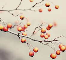 berries in the woods by beverlylefevre