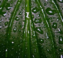 Raindrops by Henry Kowalski