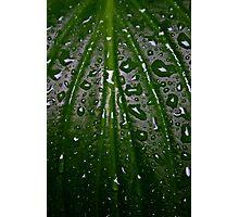 Raindrops Photographic Print