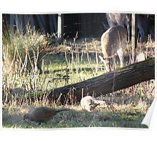 Deer and pheasants Poster