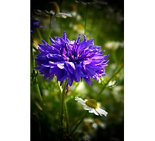 Wild Flowers Photographic Print