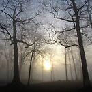 Foggy morning by Alberto  DeJesus
