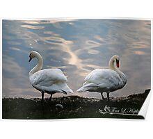 Mute Swan Interlude Poster