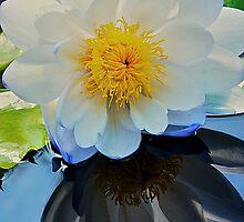 My Beautiful Reflection  by Cee Neuner