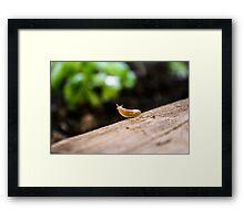 Garden Survey  Framed Print