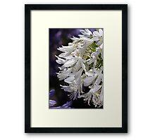 flower-agapanthus-white Framed Print