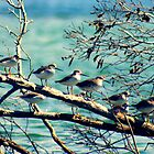 Birds on a Branch by Trish Threlfall