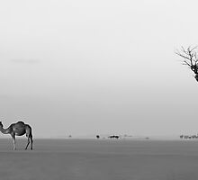 Lonely camel and tree in Dubai desert by naufalmq