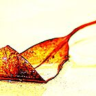 leaf on the sand  by Trish Threlfall