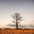 Kimberley Boab Tree by Mieke Boynton