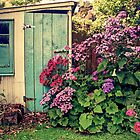 A garden shed called Robyn by Paul Alsop