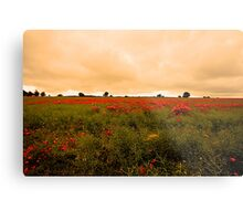 Norfolk Poppies Metal Print