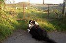 Laddie in the Hills of Llanfairfechan by Michael Haslam
