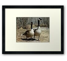 Pair of Canada Geese Walking Down a Path Framed Print