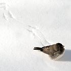 Bird on snow by crspix