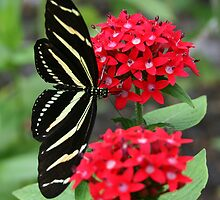 Zebra Longwing Butterfly by ThistleandThyme