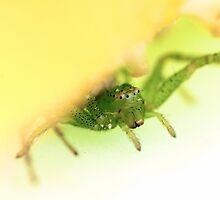 Inquisitive spider by natalieroberts
