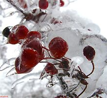Iced Crabapples by MarianBendeth