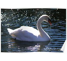 Mute Swan Stardust Poster