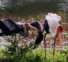 MALE STORK ♥ROMANCING THE FEMALE PAINTED STORK♥-VERSION THREE-THATS AMORE-- VARIOUS APPAREL Sticker