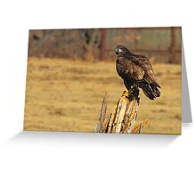 Adolescent Eagle Greeting Card
