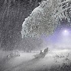 Snow Fall by Igor Zenin