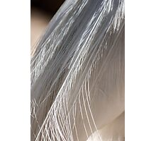 White Feathers Photographic Print