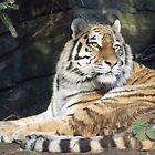 Dublin zoo 2 by DES PALMER