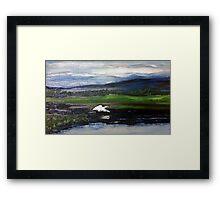 Swan over the river Framed Print