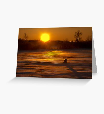 Sunrise Snowy Owl Greeting Card