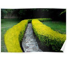 Hedge Rows And Stone Walkway Poster