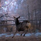 DEER AT SUNDOWN by Betsy  Seeton