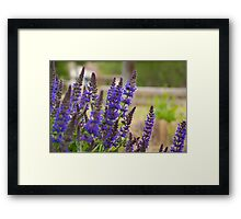 Purple Wildflowers Framed Print
