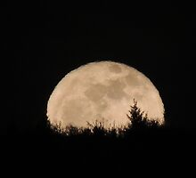January's Wolf Moon by Betty  Town Duncan