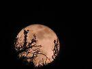 Wolf Moon by BettyEDuncan