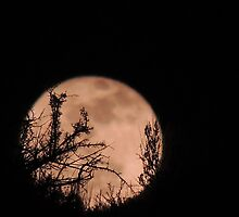 Wolf Moon in January by Betty  Town Duncan