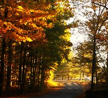 Tennessee Back Roads by Twisted-Lyme