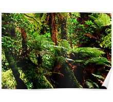 Rainforest in New Zealand Poster
