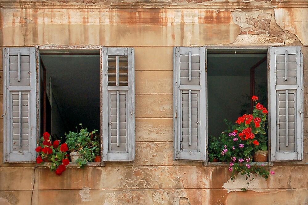 Open windows with indoor plants by Arie Koene