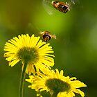 Hover Fly by Neil Bygrave (NATURELENS)