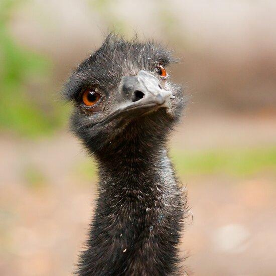 Emu by Dominika Aniola
