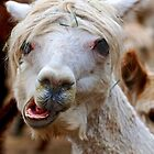 Funny Face by Cee Neuner