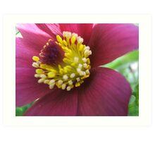 Mauve Flower Art Print