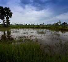 Rice Fields at Ganesha Eco Resort: Kampot, Cambodia by thewaxmuseum
