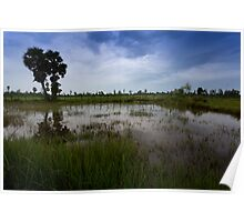Rice Fields at Ganesha Eco Resort: Kampot, Cambodia Poster