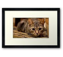 Laying in Wait Framed Print
