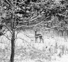 Peering Out - Deer BW Sticker